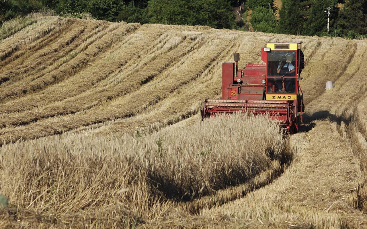 Poljoprovredna oblast