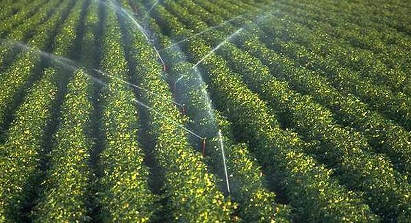Obaveštenje za vlasnike / korisnike poljoprivrednog zemljišta sa teritorije opštine Golubac
