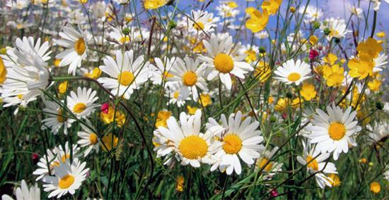 Četvrti krug obuke za uzgajanje lekovitog bilja