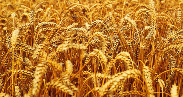 Produžen rok za predaju zahteva za odobrenje kreditne podrške poljoprivrednicima