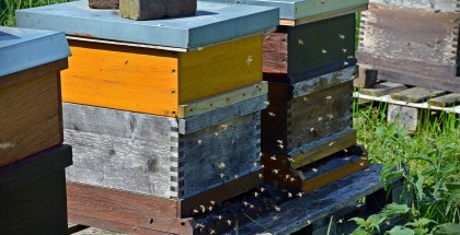 bees-1578726_1280